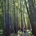 Hiking the Yokum Ridge Trail.- Yocum Ridge