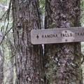 The Yokum Ridge Trail shares a trailhead with the Ramona Falls Trail.- Yocum Ridge