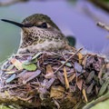 The Desert Museum also has a walk-in hummingbird aviary, which  will delight all ages.- Gilbert Ray Campground