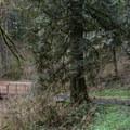 Bridges cross several creeks throughout the park.- Whipple Creek Park