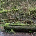 A mossy horse trough.- Whipple Creek Park