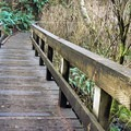 Bridge over a quiet stream on the Saint Perpetua Trail.- Saint Perpetua Trail
