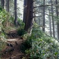 The shady, forested Saint Perpetua Trail.- Saint Perpetua Trail