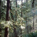 Light streams down onto the trail.- Cook's Ridge + Gwynn Creek Trail