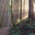 Gwynn Creek Trail.- Cook's Ridge + Gwynn Creek Trail