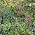 Moss covered earth along the Gwynn Creek Trail.- Cook's Ridge + Gwynn Creek Trail