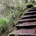 Occasional log steps ease the climb.- Cook's Ridge + Gwynn Creek Trail
