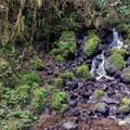 One of many creeks along Gwynn Creek Trail.- Cook's Ridge + Gwynn Creek Trail