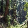 Ewoldsen Trail.- Julia Pfeiffer Burns State Park