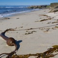 Some small sandy stretches with kelp.- Nicholson Point Park