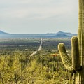 Perched in the hills outside of Tucson, the park is very accessible.- Signal Hill Petroglyphs