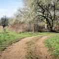 The trail begins as a wide road but soon narrows into a path.- Wapato Access Greenway Trail + Virginia Lake