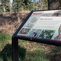 - Wapato Access Greenway Trail + Virginia Lake