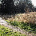 Virginia Lake's seasonal fluctuations create a marshy wetland in winter.- Wapato Access Greenway Trail + Virginia Lake