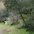 The trail starts in a corner of the Potwisha Campground in the foothills of Sequoia National Park.- Marble Falls
