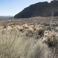 Gray rabbitbrush (Ericameria nauseosa) at Fort Rock.- Fort Rock State Natural Area