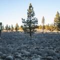 High desert landscape at Thompson Reservoir Campground.- Thompson Reservoir Campground