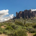 Saguaro cacti dominate the landscape.- Lost Dutchman State Park Campground