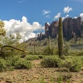 The Tonto National Forest boundary is just a short walk from the campground.- Lost Dutchman State Park Campground