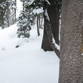 Tree blazes mark the location of the summer trail, buried in winter snow.- Emigrant Lake Trail