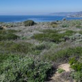 The trail winds through low shrubs.- Dana Point Headlands Conservation Area