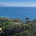 Overlooking sailboats in the harbor.- Dana Point Headlands Conservation Area