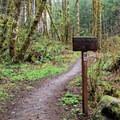 Gales Creek Trailhead.- Gales Creek Trail