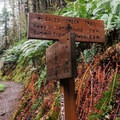 The trail junction with the Storey Burn Trail.- Gales Creek Trail