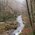 Gales Creek.- Gales Creek Trail