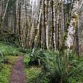 Gales Creek Trail.- Gales Creek Trail