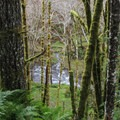 Sections of the trail rise high above Gales Creek.- Gales Creek Trail