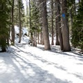 The trail to Woods Lake is well marked with blue diamond blazes.- Woods Lake