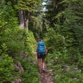 Through the Sol Duc Park area.- High Divide Loop