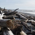 Climb over driftwood to get to the rock and sand.- Kalaloch Beach 1