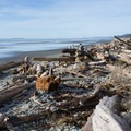 View to the north.- Kalaloch Beach 1