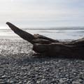 Driftwood on Kalaloch Beach.- Kalaloch Beach 1