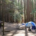 Atwell Mill's forest-shaded sites make up one of two campgrounds in the Mineral King area.- Atwell Mill Campground