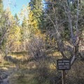 Cold Springs Nature Trail heads up the Mineral King Valley.- Cold Springs Campground