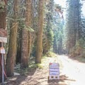 A trail from the campground leads to a view of the Clark Range.- Crane Flat Campground