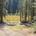 Multiple campsites sit at the edge of the meadow.- Crane Flat Campground