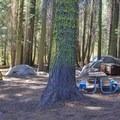 Typical campsite at Crane Flat Campground.- Crane Flat Campground