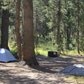 Porcupine Flat Campground is one of a handful of Yosemite's inexpensive high country campgrounds.- Porcupine Flat Campground