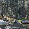 Typical campsite shaded within a lodgepole forest.- White Wolf Campground