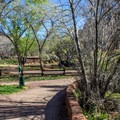 Pa'rus Trail runs right along the campground and provides access for walkers and bikes.- South Campground