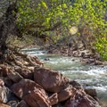 The Virgin River runs alongside the campground for river access.- South Campground