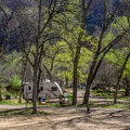 The large cottonwood trees provide welcome shade in summer.- South Campground