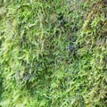 Moss grows abundantly in the rainforest climate.- Peabody Creek Loop Trail