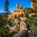 "The iconic ""hoodoos"" of Red Canyon.- Pink Ledges Trail"