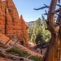 Side canyons can be explored for a short distance.- Pink Ledges Trail