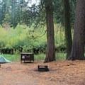 Typical campsite in Azalea Campground.- Azalea Campground